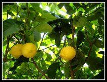 Reportajes de Árboles. Cuidar de tus plantas es facilisimo.com