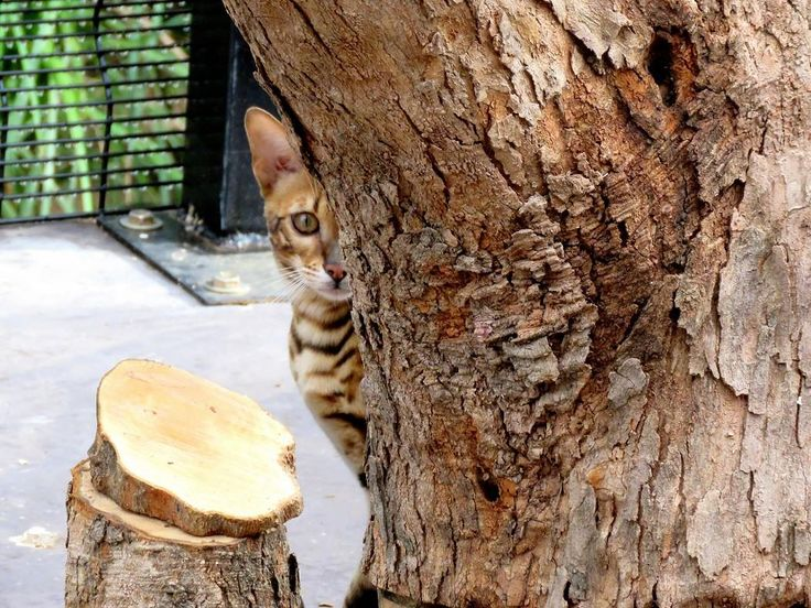 Xerxes playing hide & seek in the Fortress of Cattitude at Neverwinter