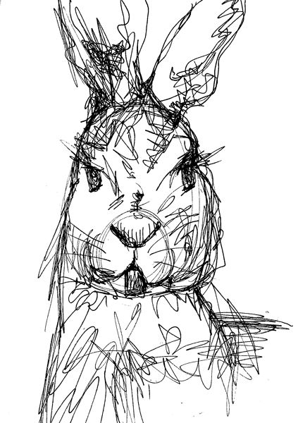 Crazy hare pen and ink line drawing!