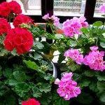 Καλλιεργητικές εργασίες Μαρτίου-Απριλίου - Φυταγορά Σερρών