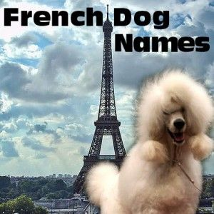 French Dog Names Page, poodle in front of the Eiffel tower