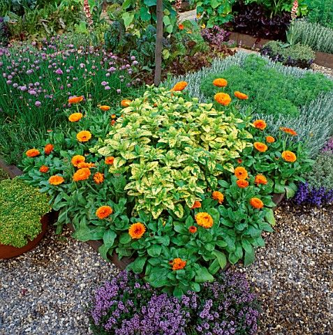 Dan Pearson 1992, An Urban Oasis for The Gardener Magazine, Silver Gilt Medal Chelsea Flower Show, square herb beds with orange calendula and variegated lemon balm. Potager (ornamental vegetable/kitchen garden)