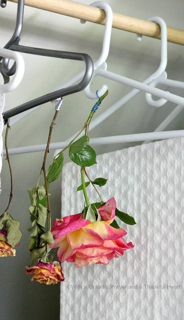 With a Grateful Prayer and a Thankful Heart: How to Dry Roses