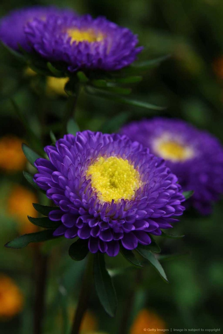 423 Best Straw Flowers Images On Pinterest