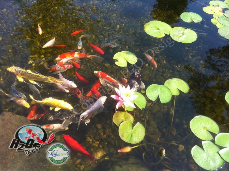 17 best images about pond fish pond life photos on for Pond problems
