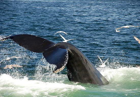 Visit the annual Hermanus Whale Festival for an ultimate whale watching experience. Perfect as a day trip from Cape Town. Read more...