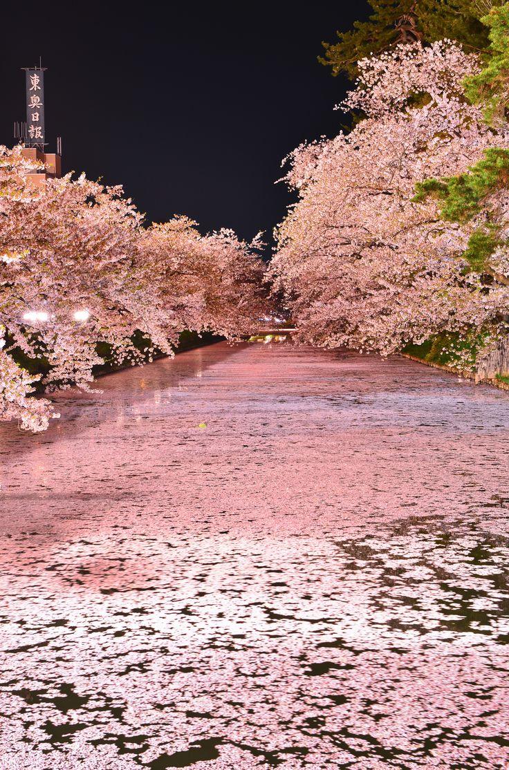 粉紅的浪漫(DSC_9740) | Flickr - Photo Sharing!