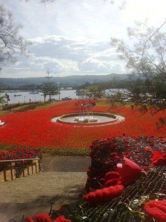 Gosford Anzac poppies