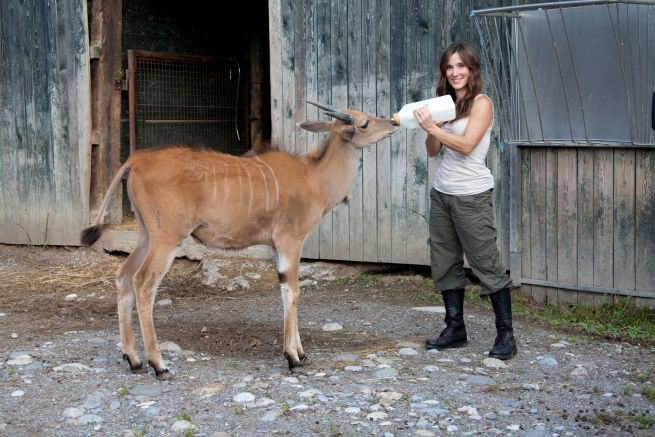"""Sul set di """"Selvaggi si nasce"""": Roberta Castiglioni con un'antilope alcina"""