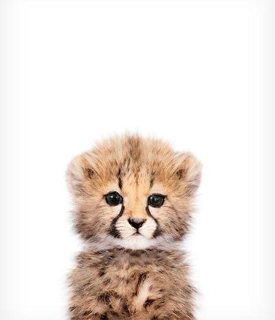 Baby Cheetah Printable Art