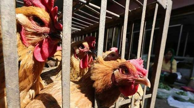 More than 20,000 chickens have died from a bird flu outbreak at a hen farm in northwest China's Shaanxi Province, a media report stated today.