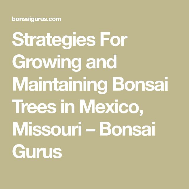 Strategies For Growing and Maintaining Bonsai Trees in Mexico, Missouri – Bonsai Gurus