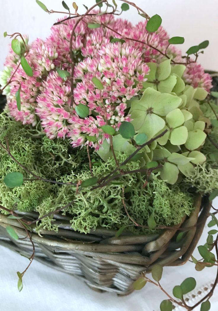 Poule grasse et hortensias du jardin   – Floristik