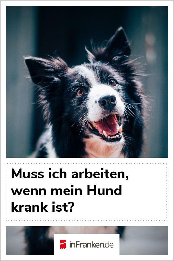 Der Hund Ist Krank Muss Ich Trotzdem Auf Arbeit Hunde Interaktives Hundespielzeug Angstlicher Hund