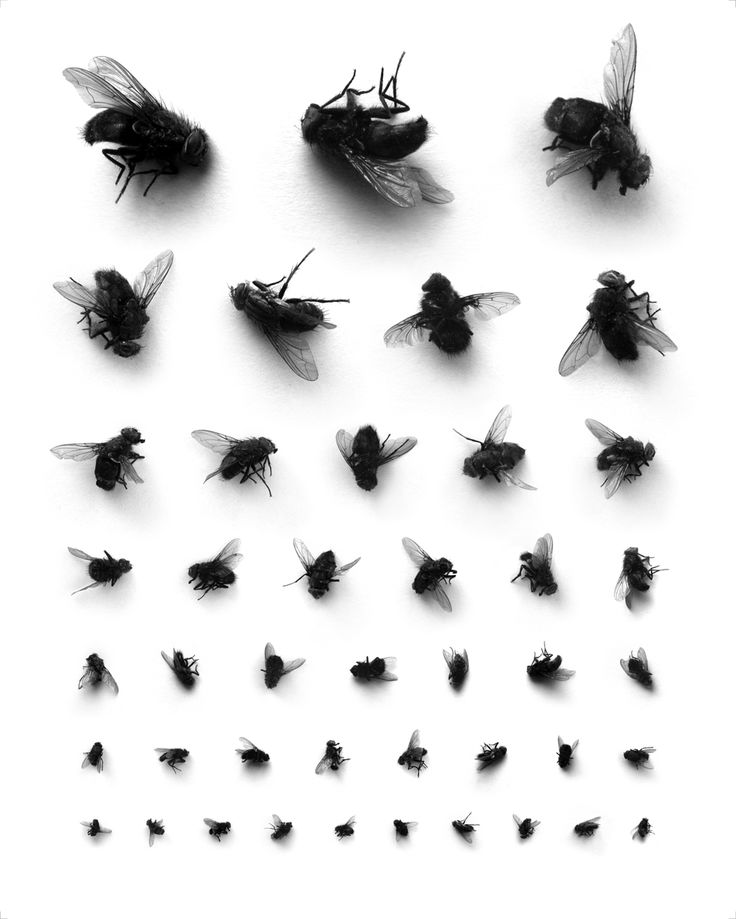 Flies.  According to size....from  'Things Organized Neatly'