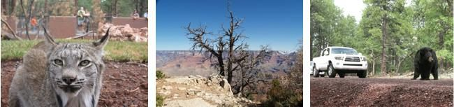 Why visit Grand Canyon