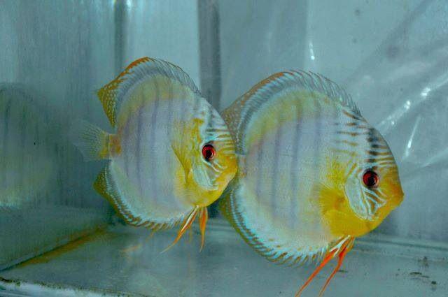 527 best aquariums peace of mind images on pinterest for Koi zot i mange zordi