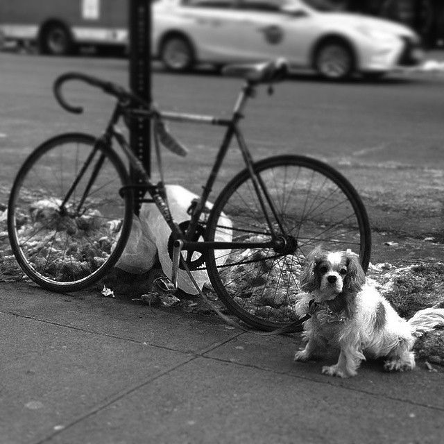 Is this dog mine if it's locked up to my bike? by triplerush http://ift.tt/16MceU9