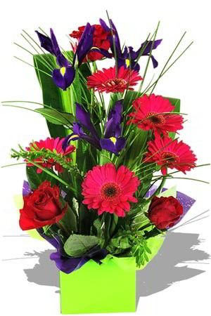 Alluring - Win over that special someone with this stunning, utterly original, boxed arrangement of purple Iris, scarlet Gerberas and crimson Roses. Alluring makes a suitable gift solution for almost every occasion, you just can't lose with this choice $79.28