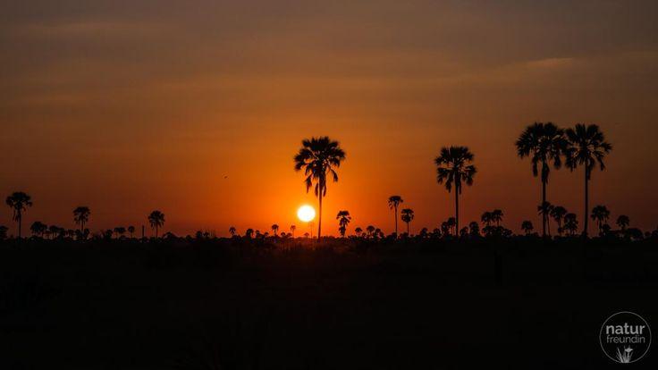 Sonnenuntergang beim Xigera Camp. Traumhafte Stimmung, die wir mit unseren Rangern bei Gin Tonic erlebten. Mehr über die Tierwelt im Okavangodelta kannst du in meinem Reisebericht nachlesen.
