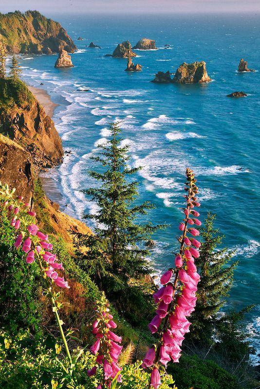Foxglove and beach. Samuel H. Boardman State Scenic Corridor. Oregon