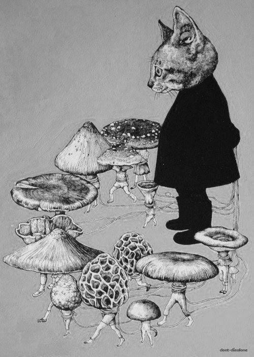 (2) I Love Hallucinogins: Peyote, Shrooms, & LSD