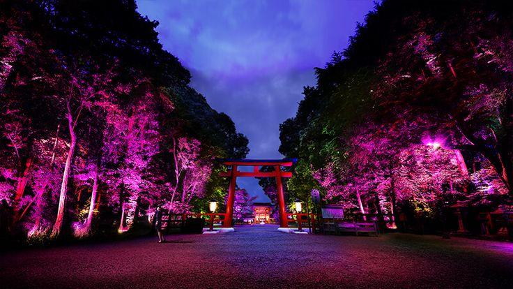 呼応する木々 – 下鴨神社 糺の森 | 下鴨神社 糺の森の光の祭