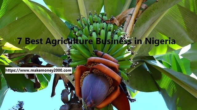 Are you looking for an agriculture business in Nigeria to start? Explained in this post are some of the best agribusiness ideas you can start in Nigeria.