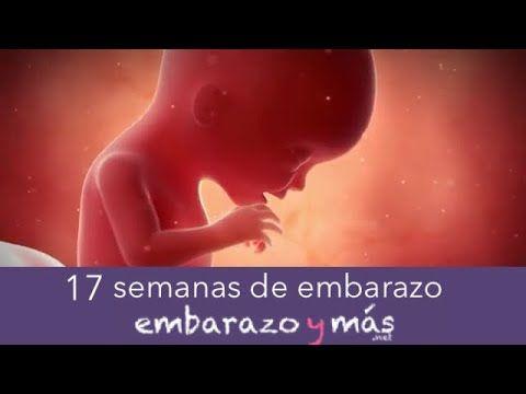 17 semanas de embarazo - Cuarto mes - EMBARAZOYMAS - YouTube ...