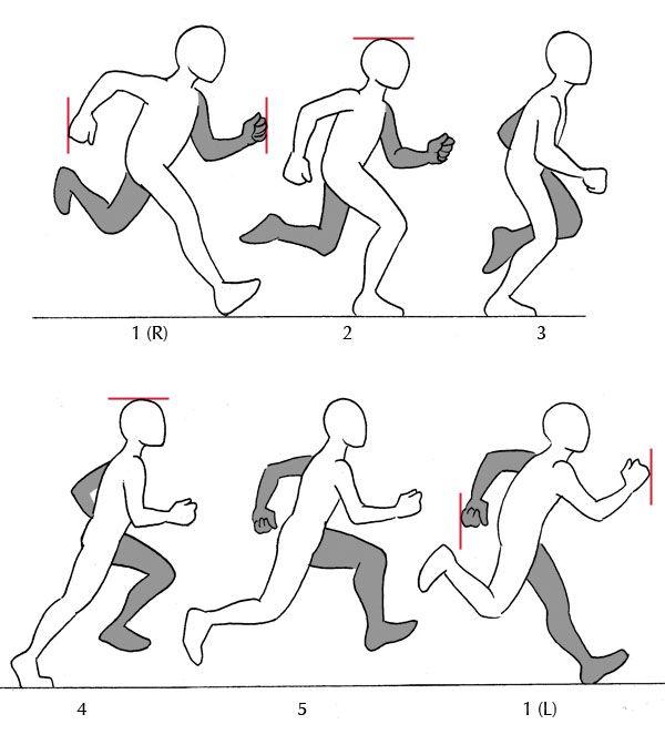 Human Anatomy Fundamentals: Additional Tips