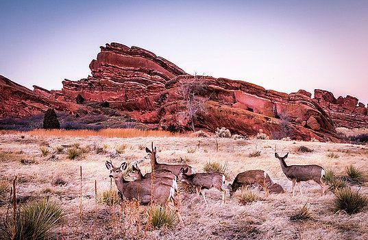 Art Calapatia - Deer and Red Rocks