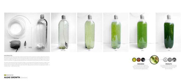 Carolyn Butler - Algae Growth 01_