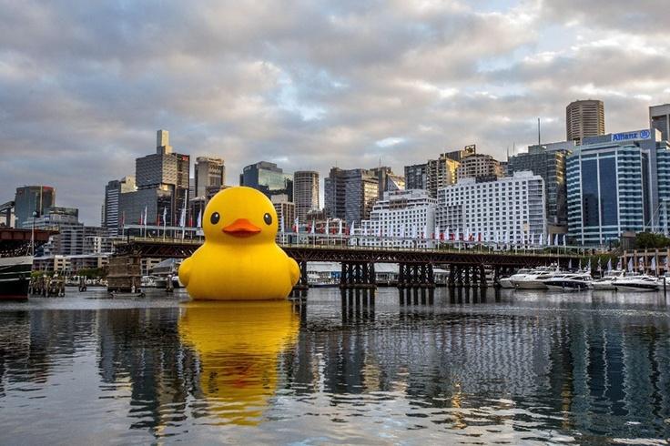 Január 3. - Ausztrália: gumikacsa Sydney kikötőjében. A 15 méter magas és 18 méter széles installációt Florentijn Hofman holland művész készítette a Sydneyi Fesztiválra. Londonban néhány hete a Temzén úszott egy gigászi méretű gumikacsa, amely akkora ámulatot keltett, hogy percekre megbénította a várost - ez azonban csupán egy szerencsejátékcég reklámjaként szolgált.