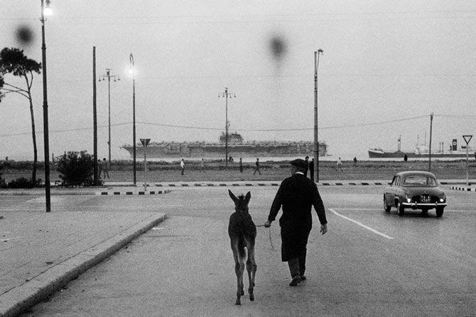 L'asinello e la portaerei, 1960