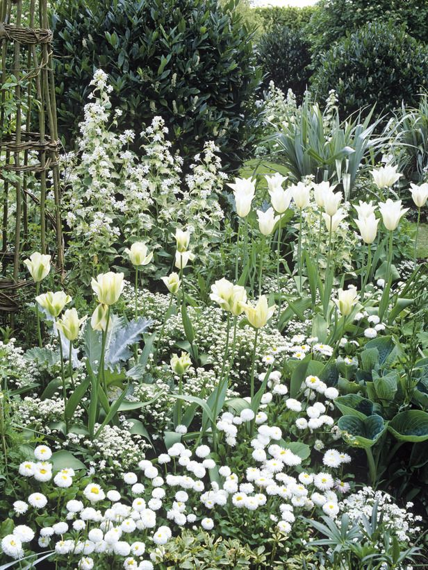 White forget-me-nots, tulips, daisies and money plants combine with hostas and silvery astelia foliage.