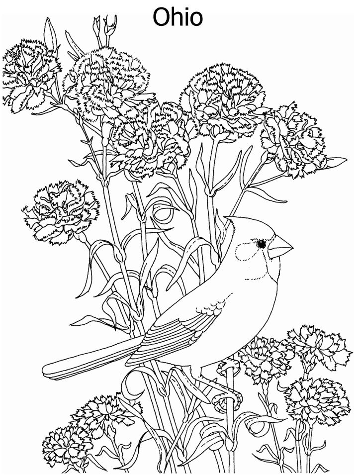 Difficult Coloring Pages For Adults Christmas : 17 best images about coloring pages on pinterest