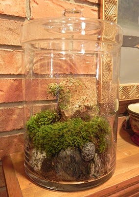 Moss Garden , use a glass container with lid to keep in moisture, great for indoors. Experiment with different mosses