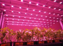 Best LED Grow Lights 2015 - Comparison & Reviews of the Top Rated LED Grow Lights