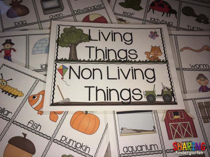 sorting living and non living things