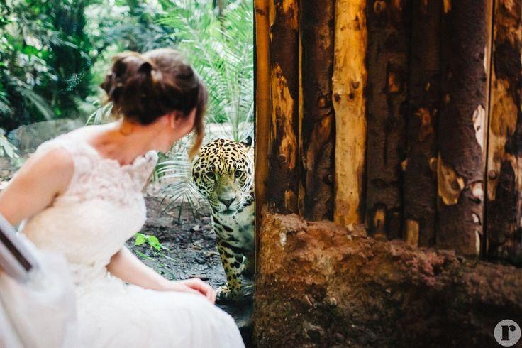 Chester Zoo Wedding Photography