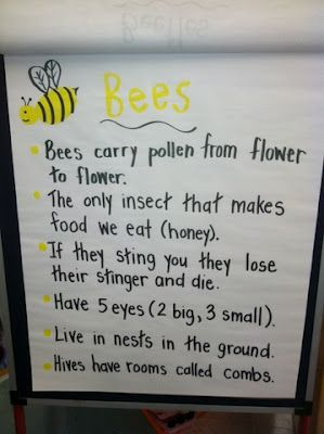 Great anchor chart with facts on bees