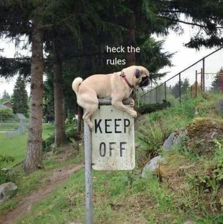 b3ffb1fce598b0b795dde1fa9d734ddf happy colors lol memes 213 best dog memes images on pinterest funny stuff, animales and cats