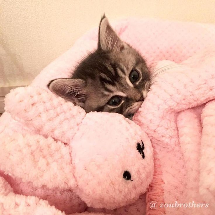 'It's Sunday Mummy, I'm staying in Bed with Bunny today' - Little Baby Kitten and her Bunny Cuddly Toy