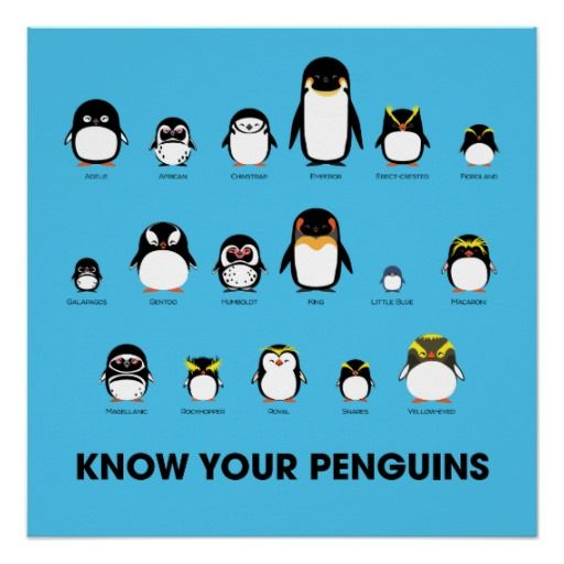 Know Your Penguins poster is a must have for any penguin lover. Features all 17 species. Which is your favorite? Celebrate them all on Penguin Appreciation Day, celebrated every year on January 20. http://www.zazzle.com/know_your_penguins_poster_perfect_poster-256882626098839754?rf=238839619545589958 #arctic #blue #animal #cute