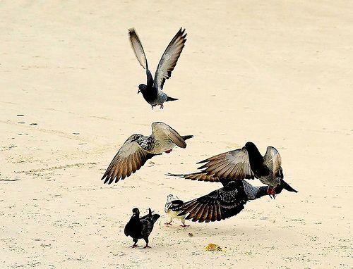 Pombas na praia / Doves on the beach