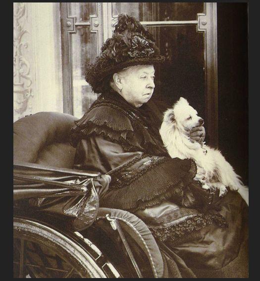 Dog Kennels Prince Albert