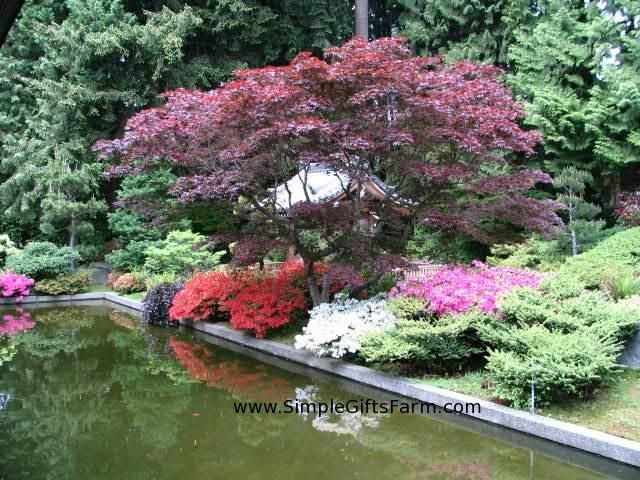 49 Best Images About Japanese Garden Design On Pinterest | Gardens