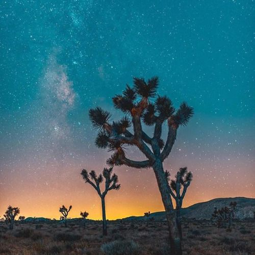 [#picoftheday] Le temps passe rapidement lorsque vous vous déplacez dans le désert.  @tomdewh #Nikon #NikonFr #TeamNikon #joshuatreenationalpark #california via Nikon on Instagram - #photographer #photography #photo #instapic #instagram #photofreak #photolover #nikon #canon #leica #hasselblad #polaroid #shutterbug #camera #dslr #visualarts #inspiration #artistic #creative #creativity