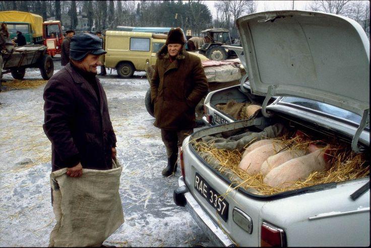 Żywe świnki na sprzedaż, targ w Grójcu, stan wojenny, luty 1982 © Chris Niedenthal