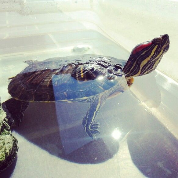 Turtle on sunny day